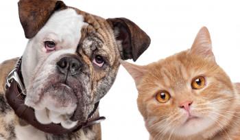 Tem ou quer ter um animal de estimação?