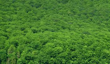 O que está em jogo na Amazônia? Entenda o decreto de Temer